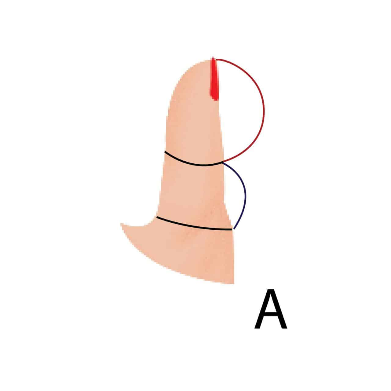 What does size of thumb reveals about your personality