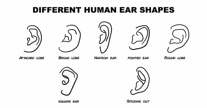 what ear shape says about you